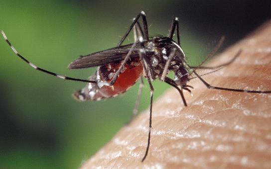 punture zanzare